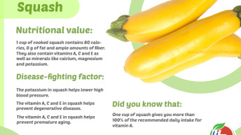 Squash Health Benefits with Infographic